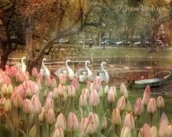 Boston Public Garden Swan Boats - Large Canvas Art Vintage Flower Prints - Boston Massachusetts Office Wall Art - Boston Art