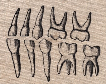 Screen print of human teeth on fabric