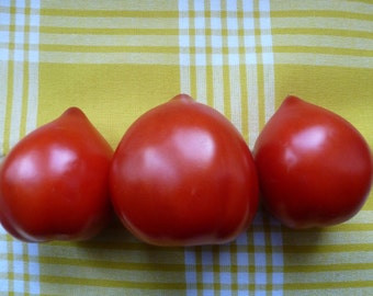 Heart shaped Tomatoes, Teton de Venus 10 tomato seeds