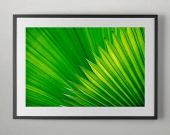 Green Tropical Plants, Fine Art Photography, Home decor, Office Wall Art, Fine Art Photograph