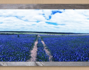 Print Features Sea of Bluebonnets That Have Replaced Water in Lake Buchanan
