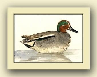 Duck Bird -Eurasian Teal duck- Gamebird wildlife animal decor- bird animal wall art -duck- Original watercolor painting- Juan Bosco
