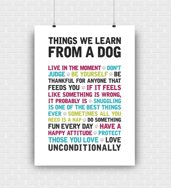 Things We Can Learn From A Dog 1 | Shahid Lincoln ...