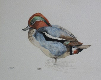 Original Watercolour Bird Painting of a Teal  - signed by the artist GTH