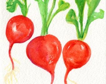 Red Radishes watercolor painting original, Vegetable wall art 4 x 6 original watercolor painting of red radish, kitchen decor