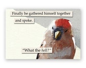 Finally Magnet - Bird - Humor - Animal - Nature - Mincing Mockingbird - Gift - Stocking Stuffer