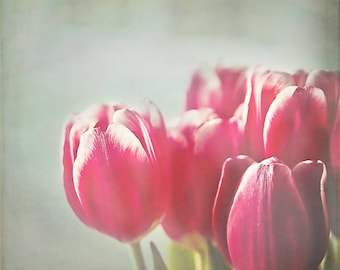 Red Tulips, Flower Photography, pink red white wall art, spring floral home decor, shabby chic inspired - 8x8
