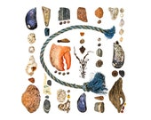 Beachcombing series No.86 - 8x8 photograph - lobster claw, seashells, driftwood