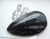 Orthoceras  Fossil Polished Black Marble Slab Paperweight Display Specimen