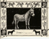 Donkey-This 6-pack of blank, ivory cards with matching envelopes features a pen-and-ink drawing  by Linda Cook DeVona of a Donkey.