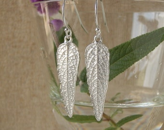 Small Mexican Bush Sage Leaf Earrings - Pure Silver Real Leaf, Botanical Herb Jewelry, Gardeners Gift