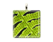 Fern Abstract - Glass Tile Photo Pendant - Original Photography