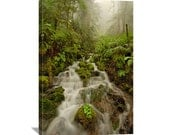 "Forest Nature Photography ""Rainforest Dream"" Forest Photo Woods Photo Fog Moss Green Forest Art Forest Print Forest Picture Canvas Wall Art"
