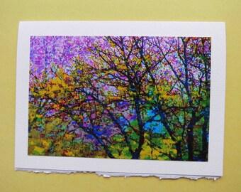 Blank Photo Card 5x7 Purple Tree Majesty