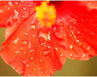 Hawaiian Fine Art Canvas wrap -Red Hibiscus -Island Flower -Dew -Rain Drops