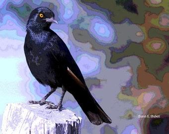 Grackle Bird Art, Blue Abstract Realism, Digital Wildlife, Woodland Animal, Wall Hanging, Rustic Cabin, Home Decor, Giclee Print, 8 x 10