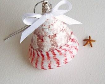 BEACH CHRISTMAS ORNAMENT, Candy Cane shell ornament, coastal ornament, nautical ornament, shell ornament, natural shell ornament