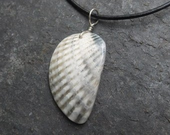 Shell jewelry - fractal ocean wing  necklace - naturally sourced in Australia.