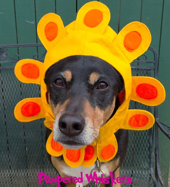 Flower Costume for dogs and cats
