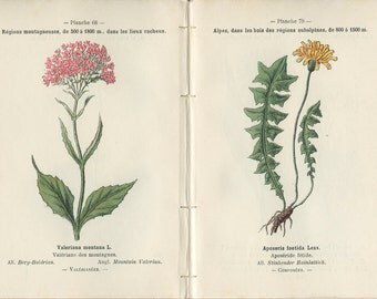 1898, Mountain Valerian, Stinker, Groundsel, Twinflower, French Botanical Book Plate, 68-79, 80-67, Henry Correvon