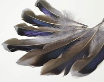 Mallard Feathers, Iridescent Green Wing - Grey (10pcs) : M18