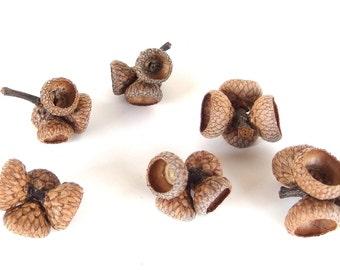 9 Sets of Small Quads - Unfinished Oak Acorn Caps J