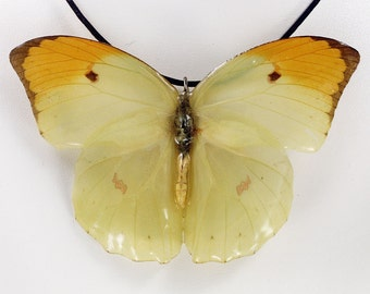 Real Butterfly Necklace - Anteos Menippe - Hand Cast Resin