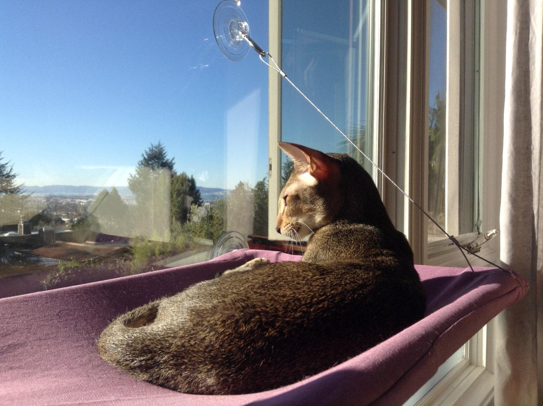 solids curious cats window perch. Black Bedroom Furniture Sets. Home Design Ideas