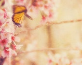 butterfly artwork, butterfly photography, nature print, baby girls room wall art, cherry blossom tree print, pink orange decor, picture