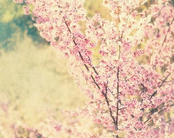 nature photography, baby nursery decor, cherry blossom tree photograph dreamy pink spring blooms mint green pastels botanical 30x30