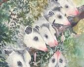 Print 8x10 Opossum Show Off portrait wildlife bowman possom possum