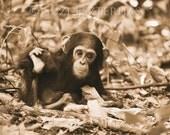 Cute Baby Chimpanzee Photo, Sepia Print, Baby Animal Photograph, Wildlife Photography,  Safari Baby Nursery Art, Jungle, Monkey, Baby Chimp