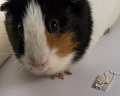 Guinea Pig pendant in Sterling Silver -all purchases result in a donation to local animal rescue