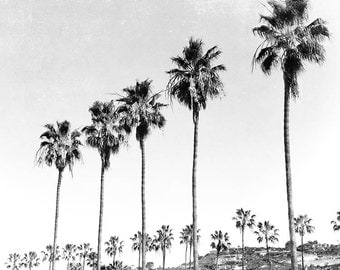 "La Jolla Palm Trees, Black And White Photography, California, Palm Tree Decor, Rows Of Trees, Palm Tree Photography, ""La Jolla Palms"""
