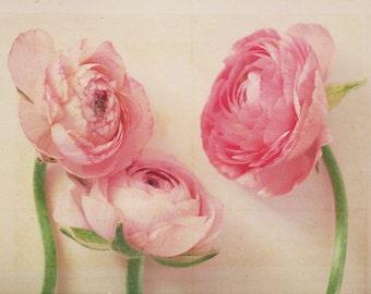 Spring Flower Photography - Fine Art Photography, rose, shabby, pastel, girls room decor, floral art print, wall decor, ranunculus, art