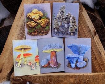 Greetings From The Third Kingdom - 5 Pack Mushroom Greeting Cards