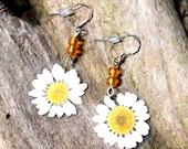 Real Daisy Earrings, Pressed Flower Earrings, Mini Daisy, White Daisy