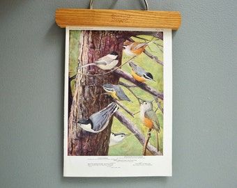 Vintage Bird Book Plate - Chickadee, Titmouse, Nuthatch - 1940s