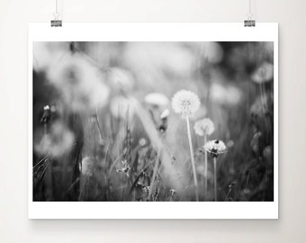 dandelion photograph black and white photography nature photography dandelion print spring photograph english garden print