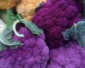 Cauliflower Organic Heirloom Purple of Sicily Seeds Rare