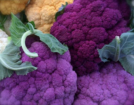 Cauliflower Organic Heirloom Purple of Sicily Seeds Rare
