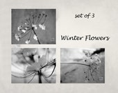 Winter flowers, Black and White, Winter photography, Queen Annes Lace, Nature photography, Frost covered flower, Set of 3 prints, Snow Frost