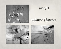 Black and white flower photograph, snow crystals, black and white, grey, minimal, fine art, winter, snow, set of 3, titled: Winter Flowers