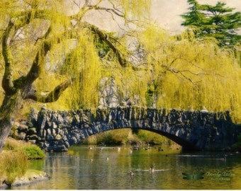 Items similar to fairy lake tree image nature landscape for Landscaping rocks victoria bc