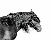 BLIZZARD, SPANISH STALLION,  Edition Print, Wall Decor, Equine art, Horse Photography, Black & White photo