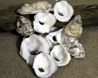 South Carolina Oyster Shells, Large or Small Shells, Drilled or Sanded, Gray and Purple, One Dozen, Beach Decor, Sea Shell