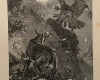 Antique Engraving Bookplate print CHAMOIS 1880s EAGLE Victorian Vintage Print 1883