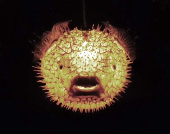 Big 14 Hanging Puffer Fish Light Real Blowfish Lamp