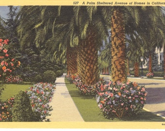 Vintage Linen Postcard....A Palm Sheltered Avenue of Homes in California....Unused...no. 2314
