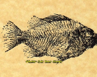 Priscacara (Green River Formation Fish Fossil) Rubber Stamp